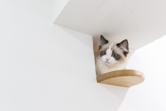 猫の「のぞき穴」